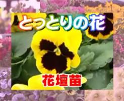 とっとりの花1